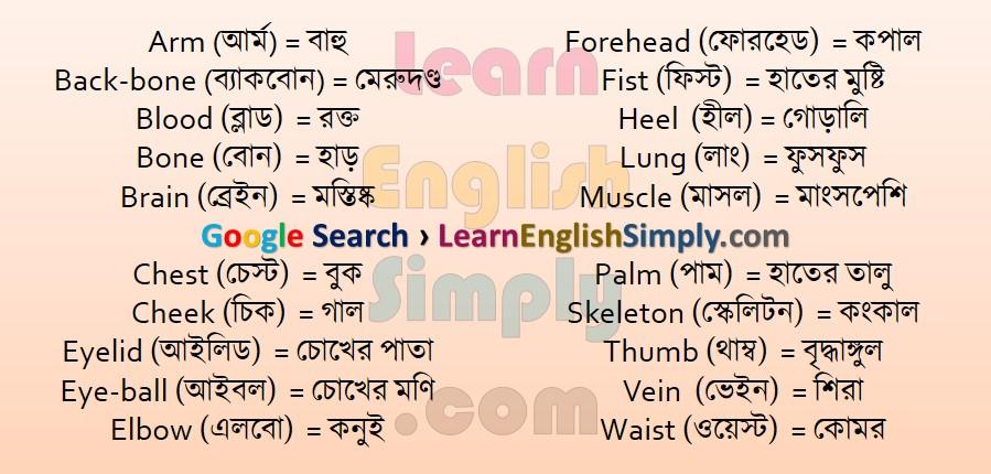 Vocabulary Human Body